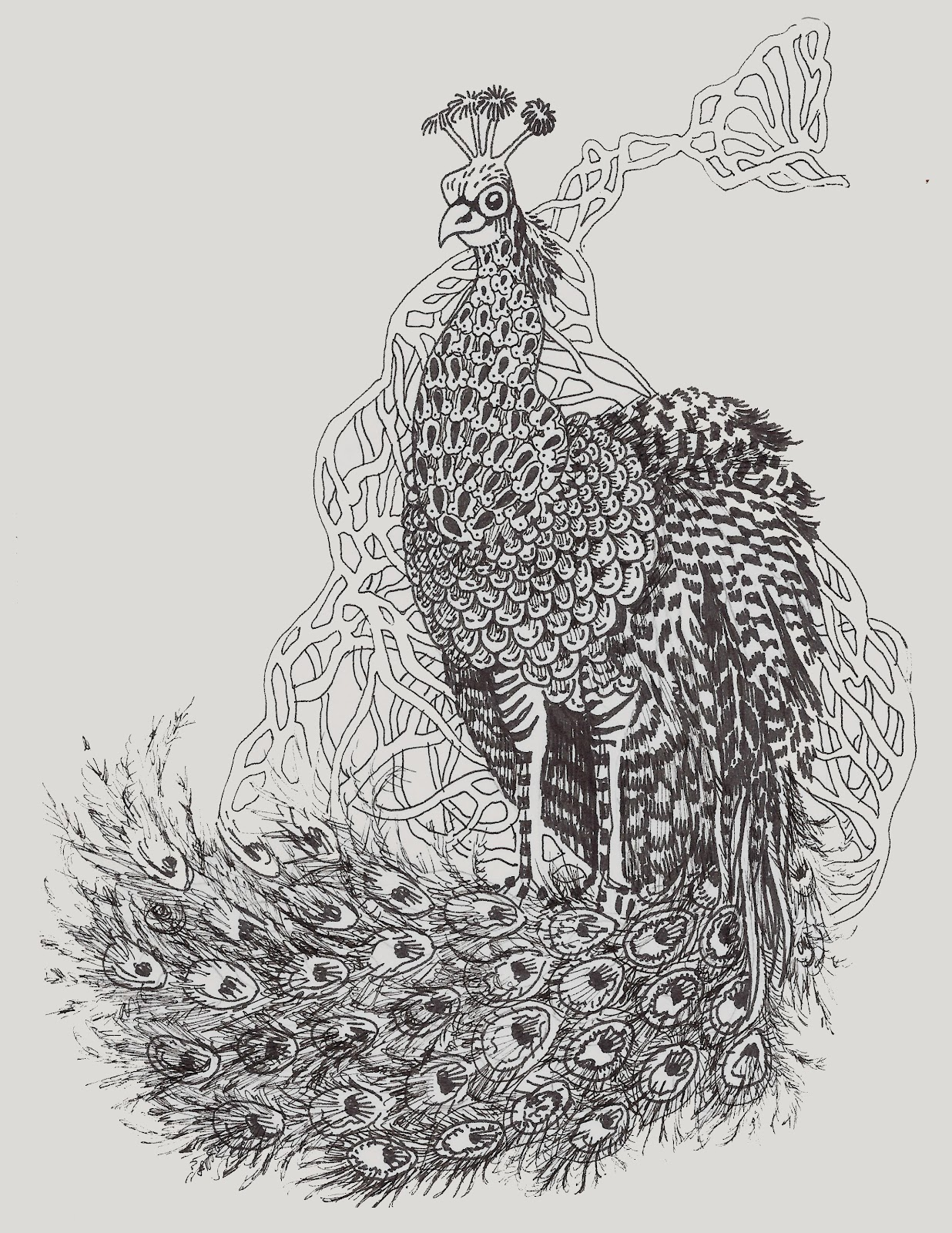 Father William And The Peacock In The Brambles Zentangle