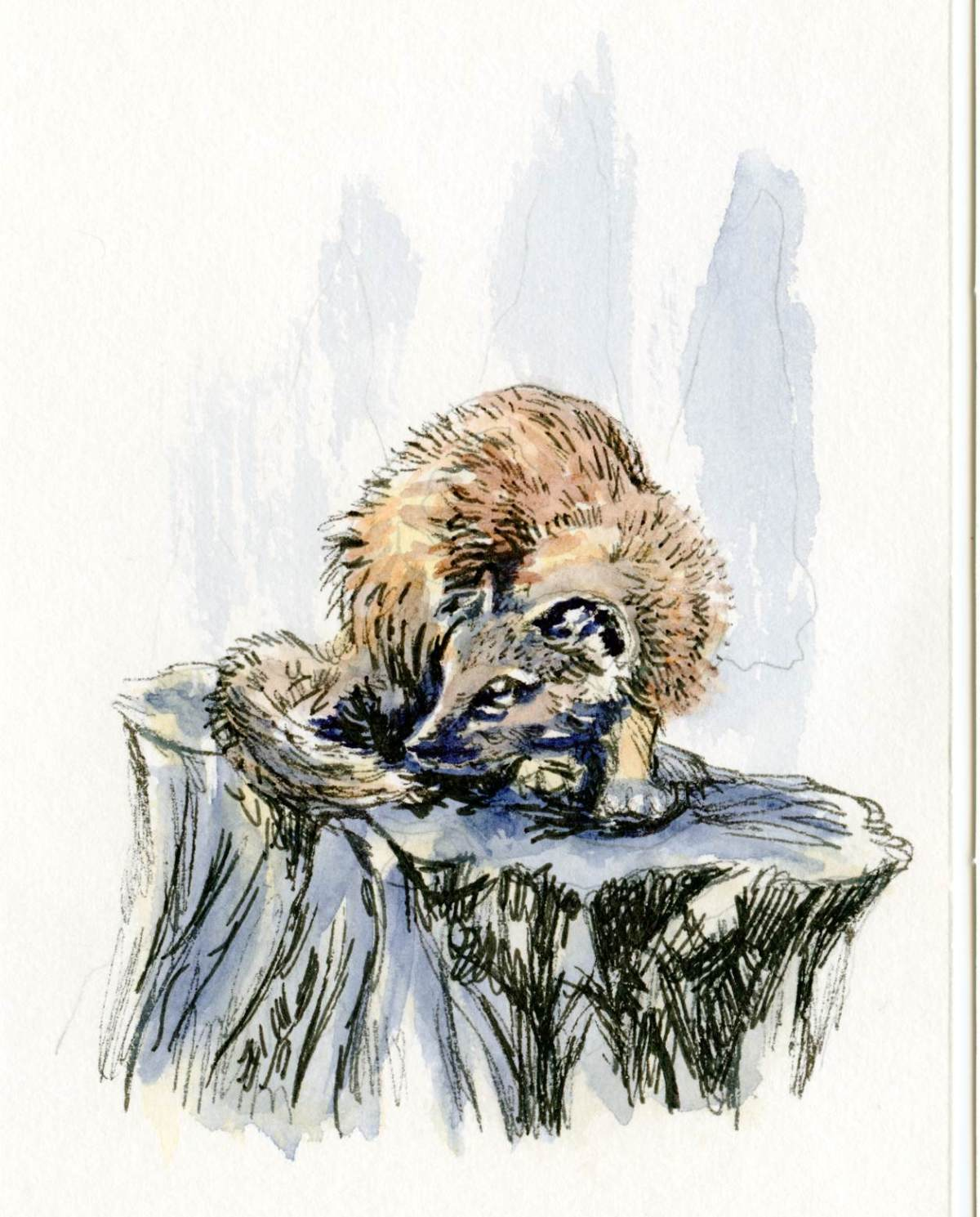 Pine Marten – Postcards for the Lunch Bag