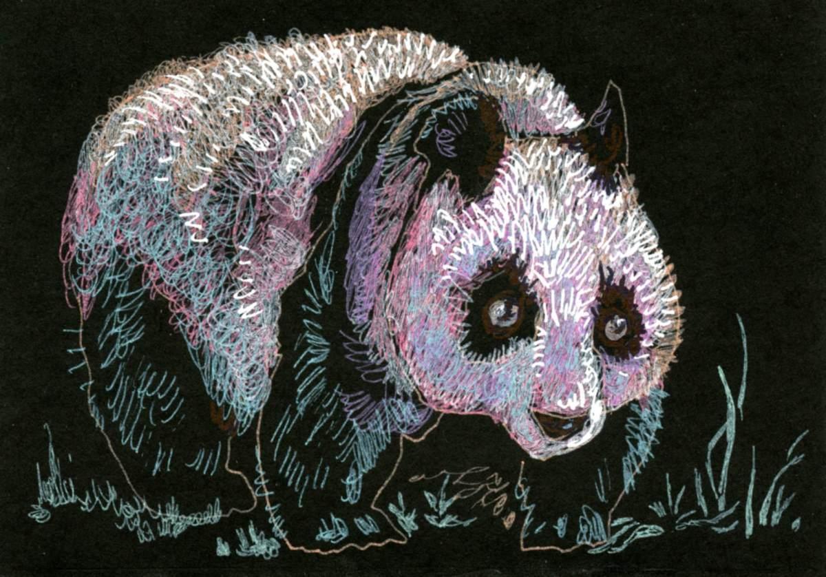 Giant Panda in a BlackBook