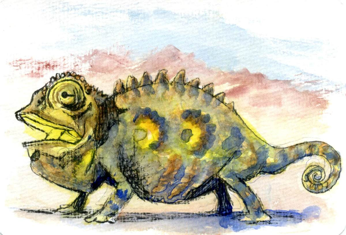 Namaqua Lizard – Postcards for the LunchBag