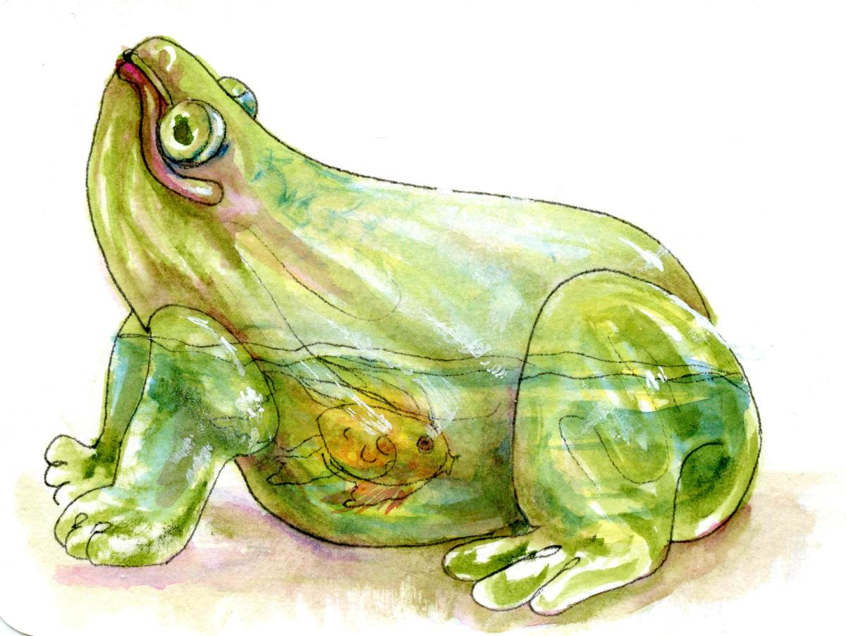 Sketchbook Revival – Glass Frog