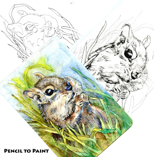 Brown Sugar Chipmunk-Pencil to Paint