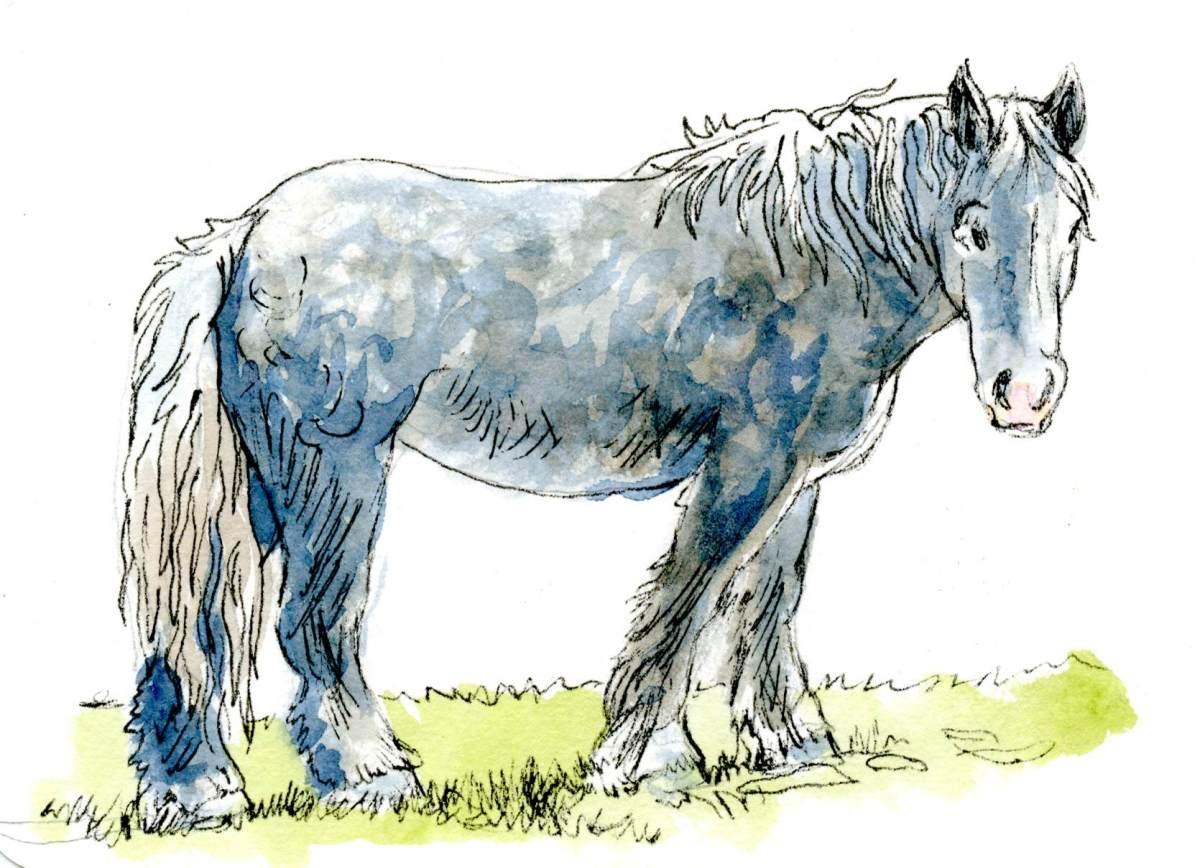 That Horse – Gray orWhite?