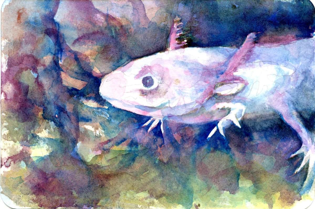 Axolotl – Postcards for the LunchBag