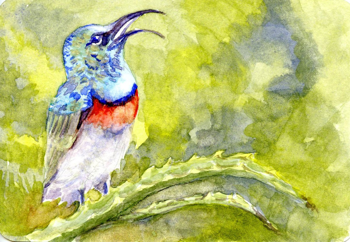 Southern Double-Collared Sunbird – Postcards for the LunchBag