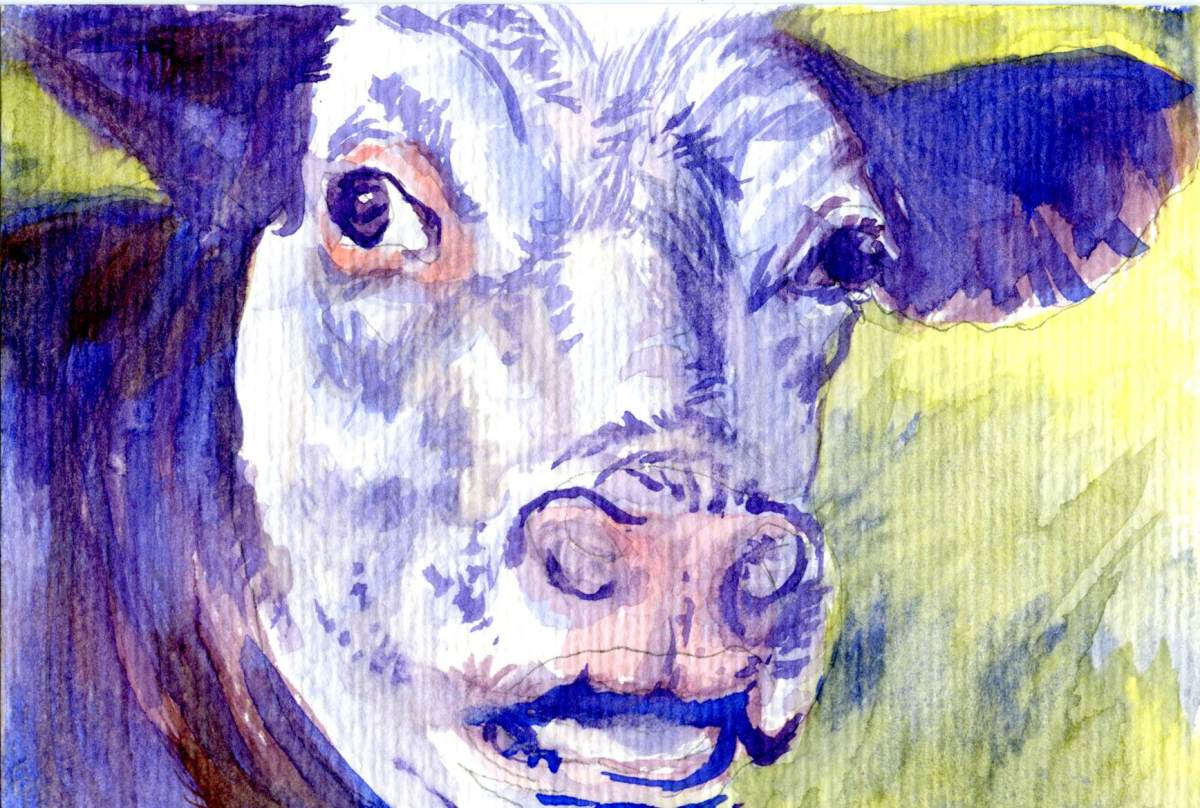 Purple Cow – Postcards for the Lunch Bag