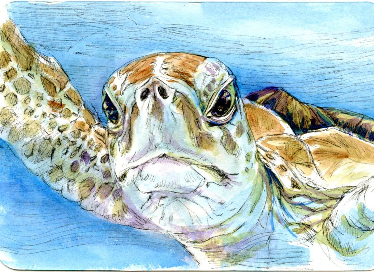 Sea Turtle – Postcards for the Lunch Bag