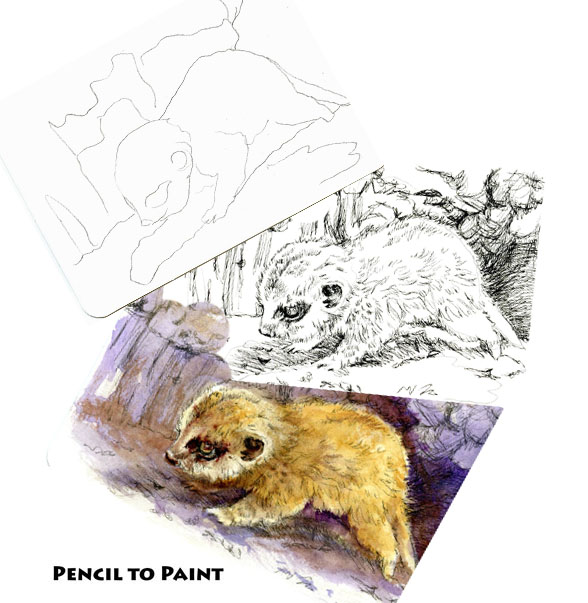 Tutorial-How to Paint a Baby Meercat