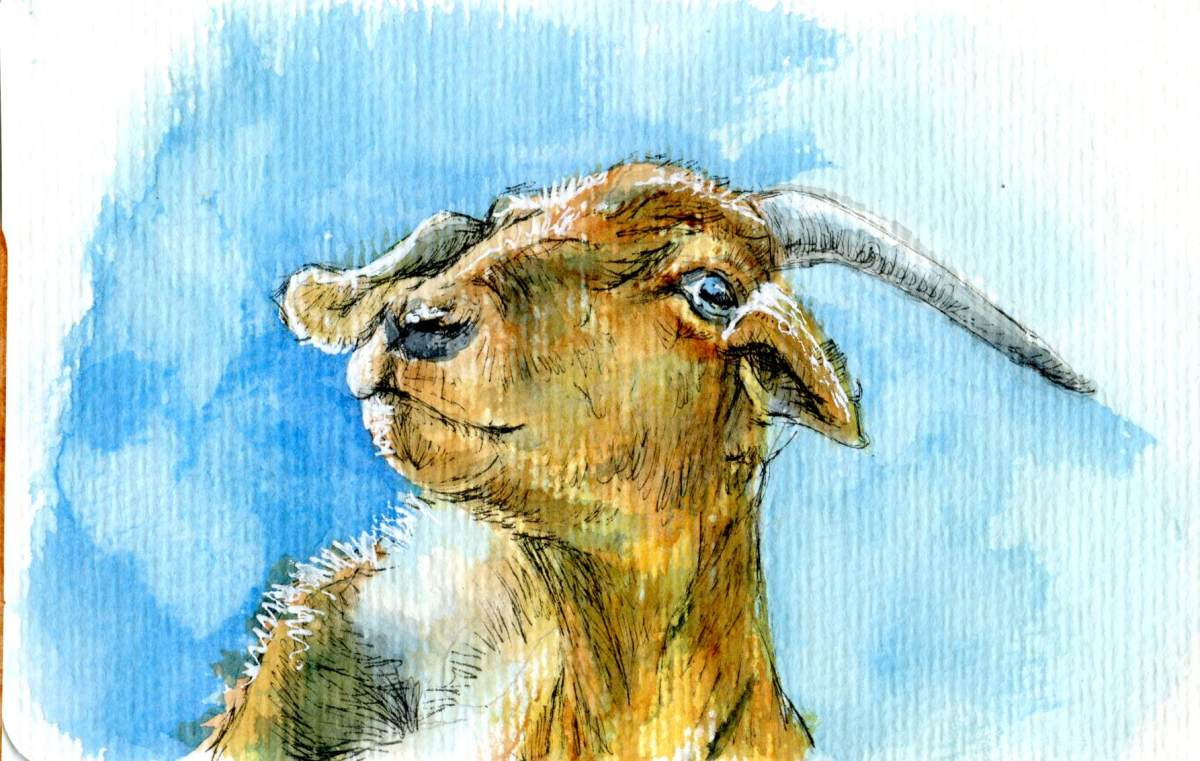 Goat Yoga – Postcards for the Lunch Bag