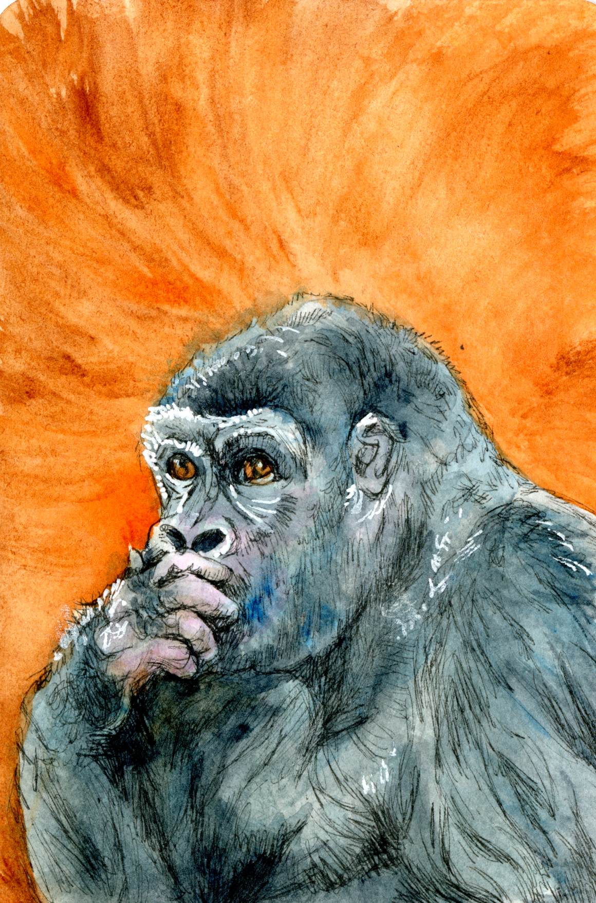Gorilla in Thinker Pose – Postcards for the Lunch Bag