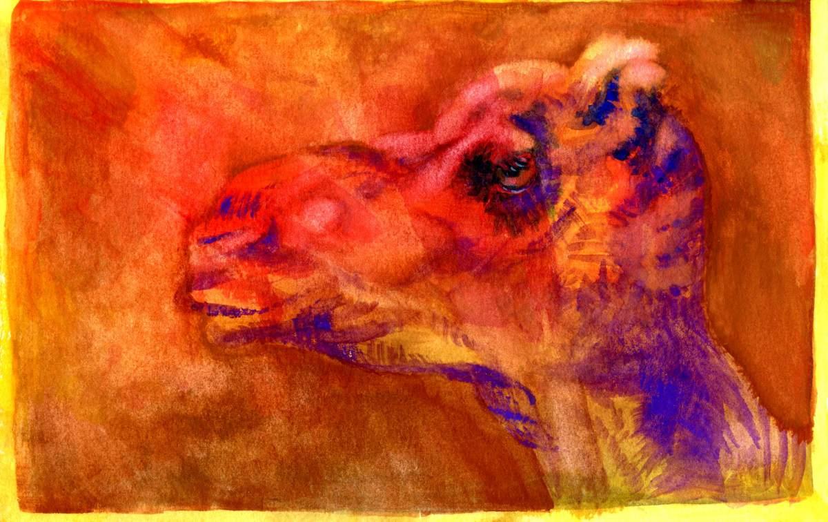 Camel in aSandstorm