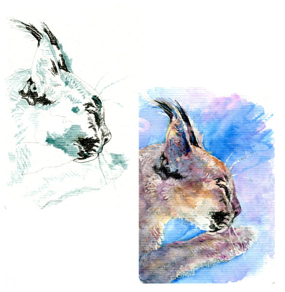Caracal Cat – Pencil to Paint Tutorial