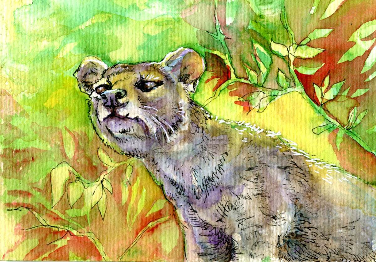 The Dreaded Fossa – Postcards for the Lunch Bag