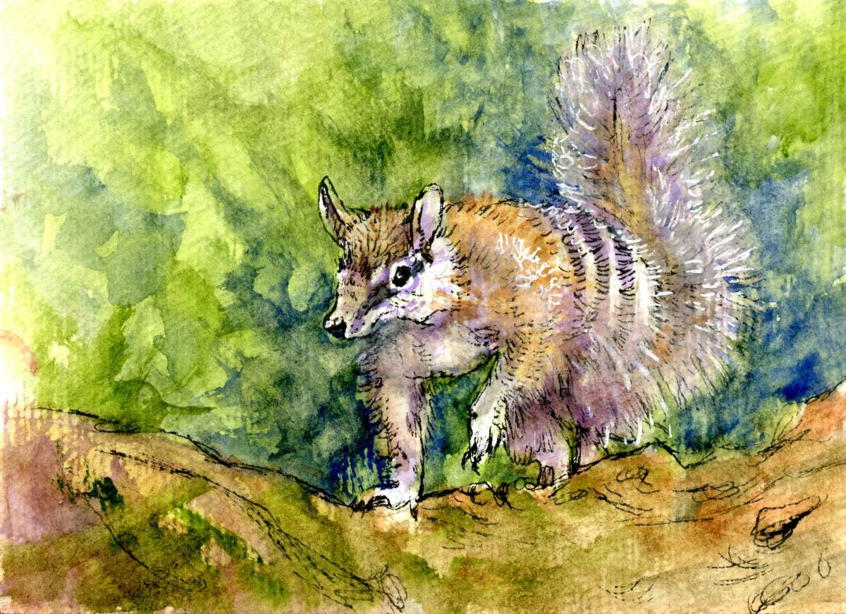Numbat – Postcards for the Lunch Bag
