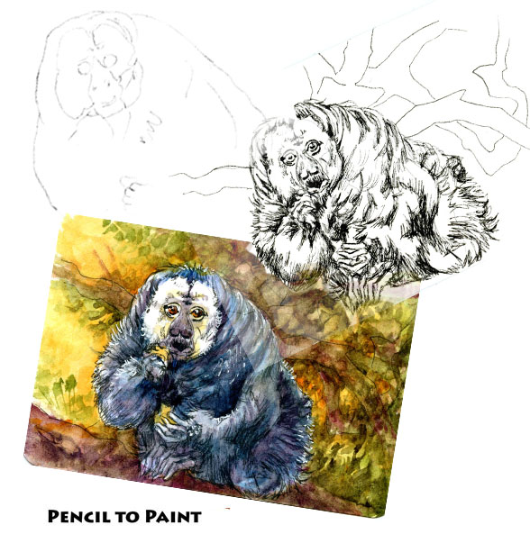 White Tail Saki – Pencil to Paint Tutorial