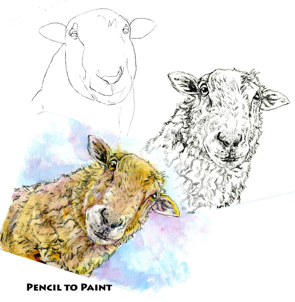 A Sheepish Hello – Pencil to Paint Tutorial