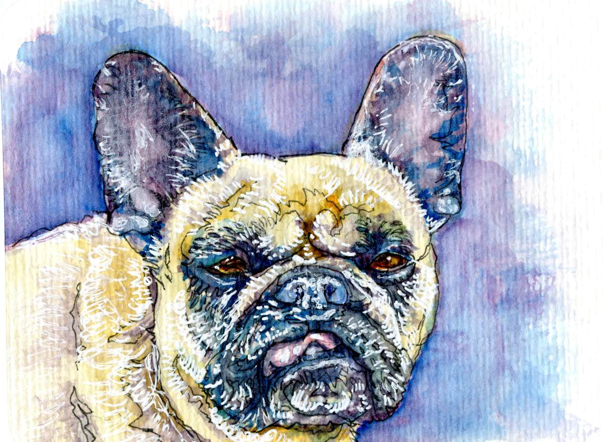 French Bulldog – Postcards for the Lunch Bag