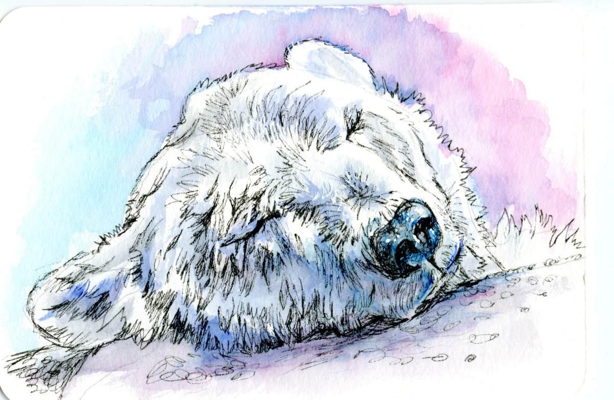 Polar Bear – Postcards for the LunchBag