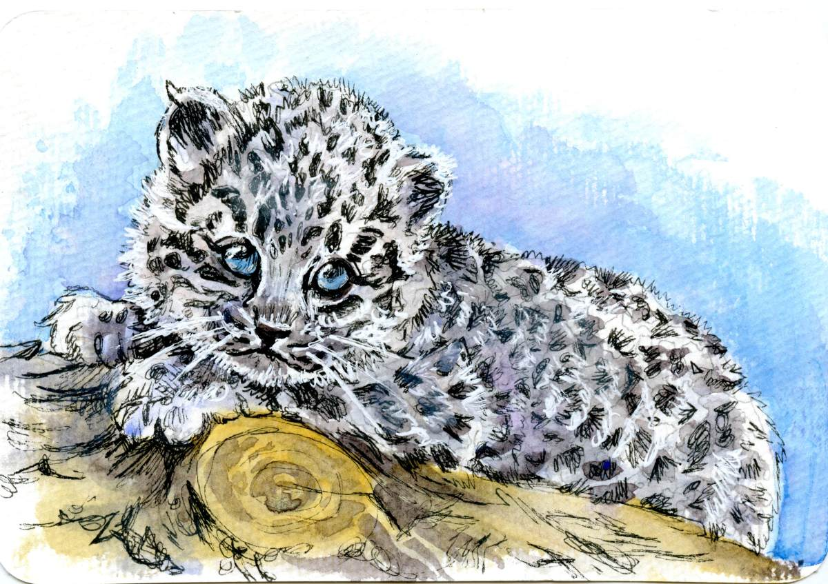 Amur Leopard Cub – Postcards for the Lunch Bag