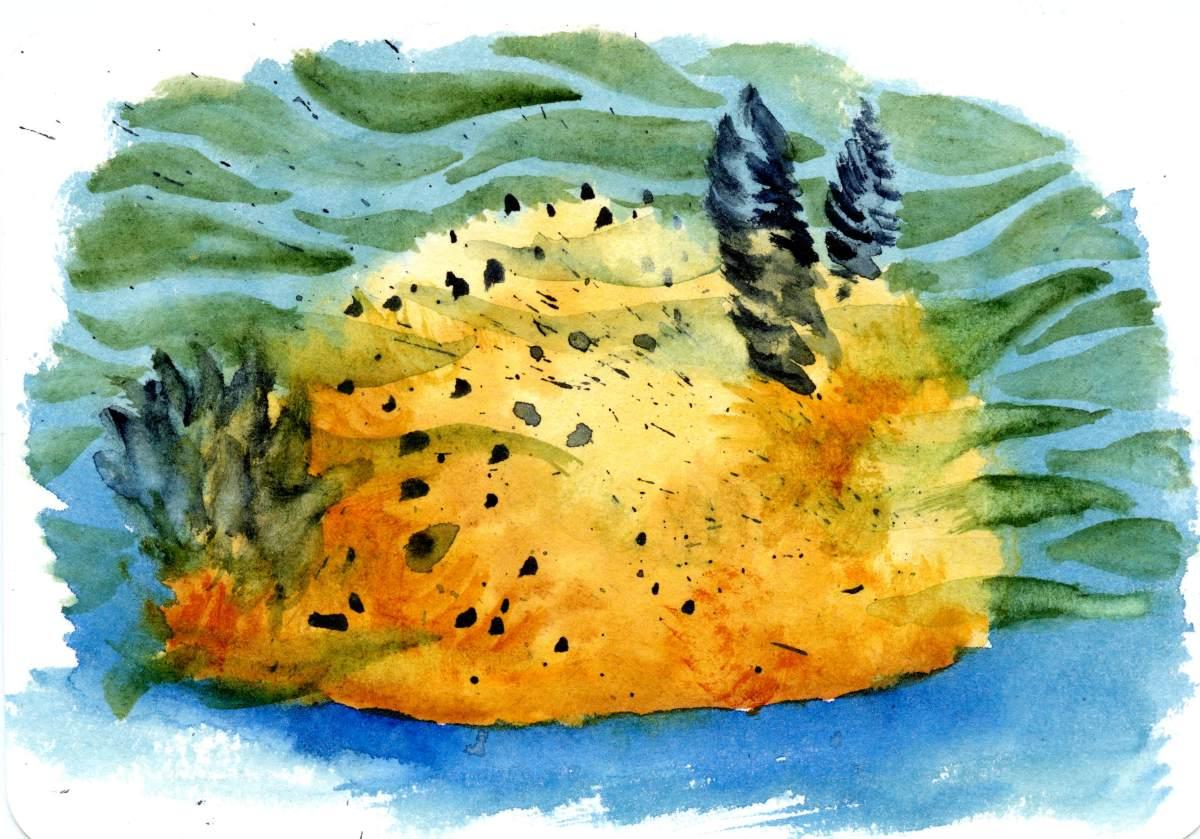 Bunny Sea Slug – Postcards for the LunchBag