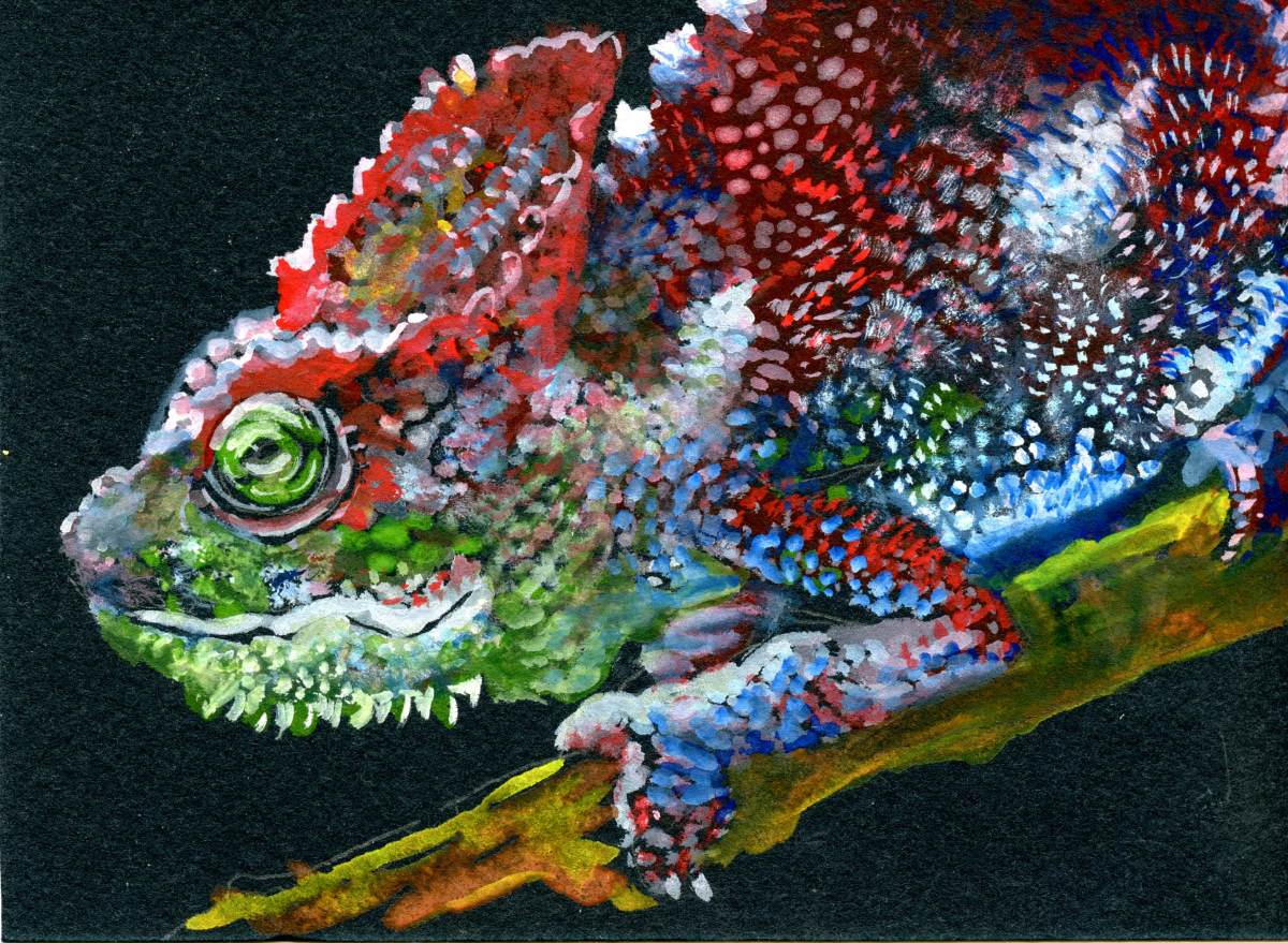 Chameleon – Postcards for the Lunch Bag