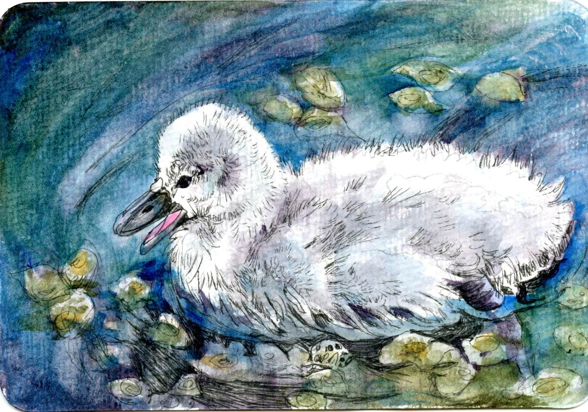Cygnet – Postcards for the Lunch Bag