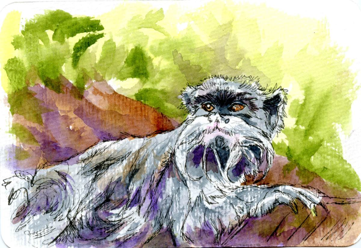 Emperor Tamarin Monkey – Postcards for the Lunch Bag