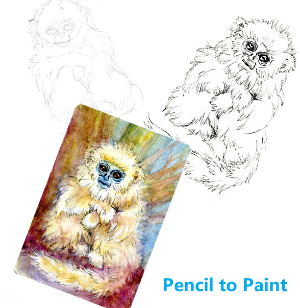 Golden Snub-nose Monkey – Pencil to Paint