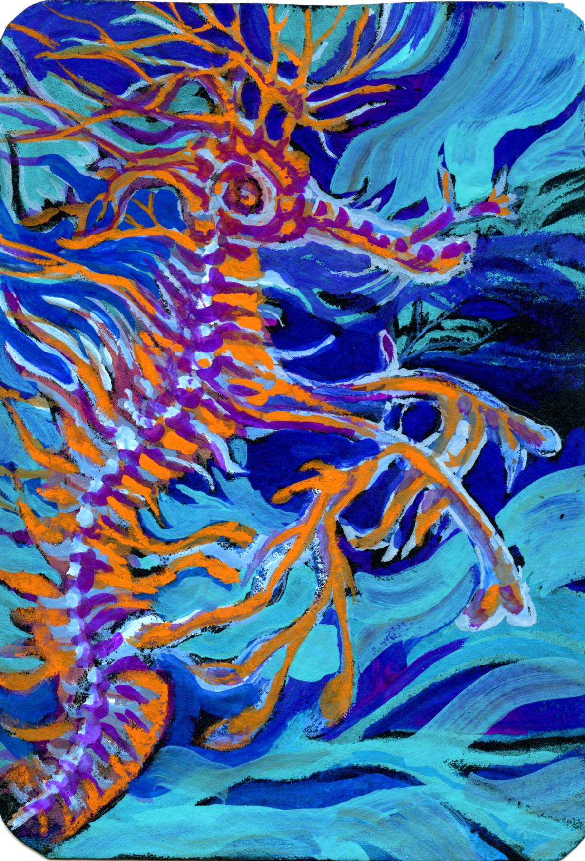 Leafy Sea Dragon – Postcards for the Lunch Bag