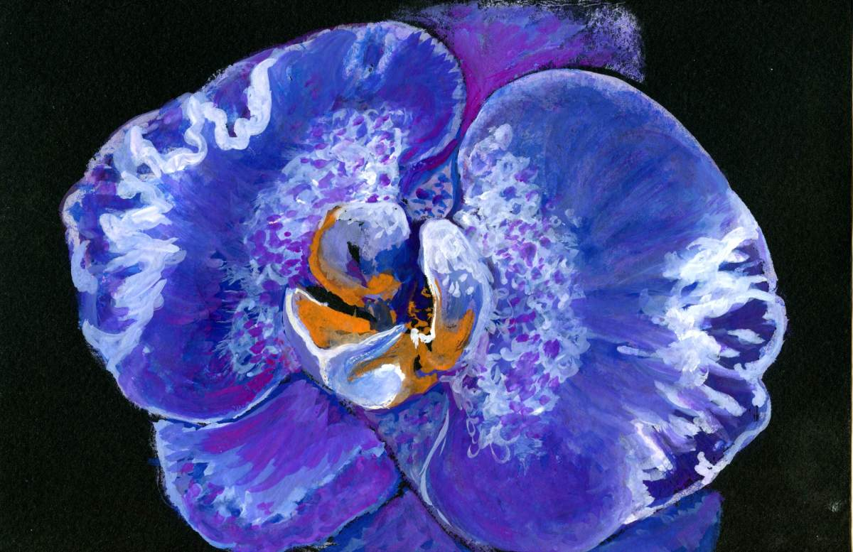 Orchid On Black – Postcards for the Lunch Bag