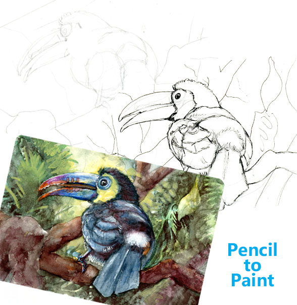 Keel-billed Toucan – Pencil to Paint Tutorial