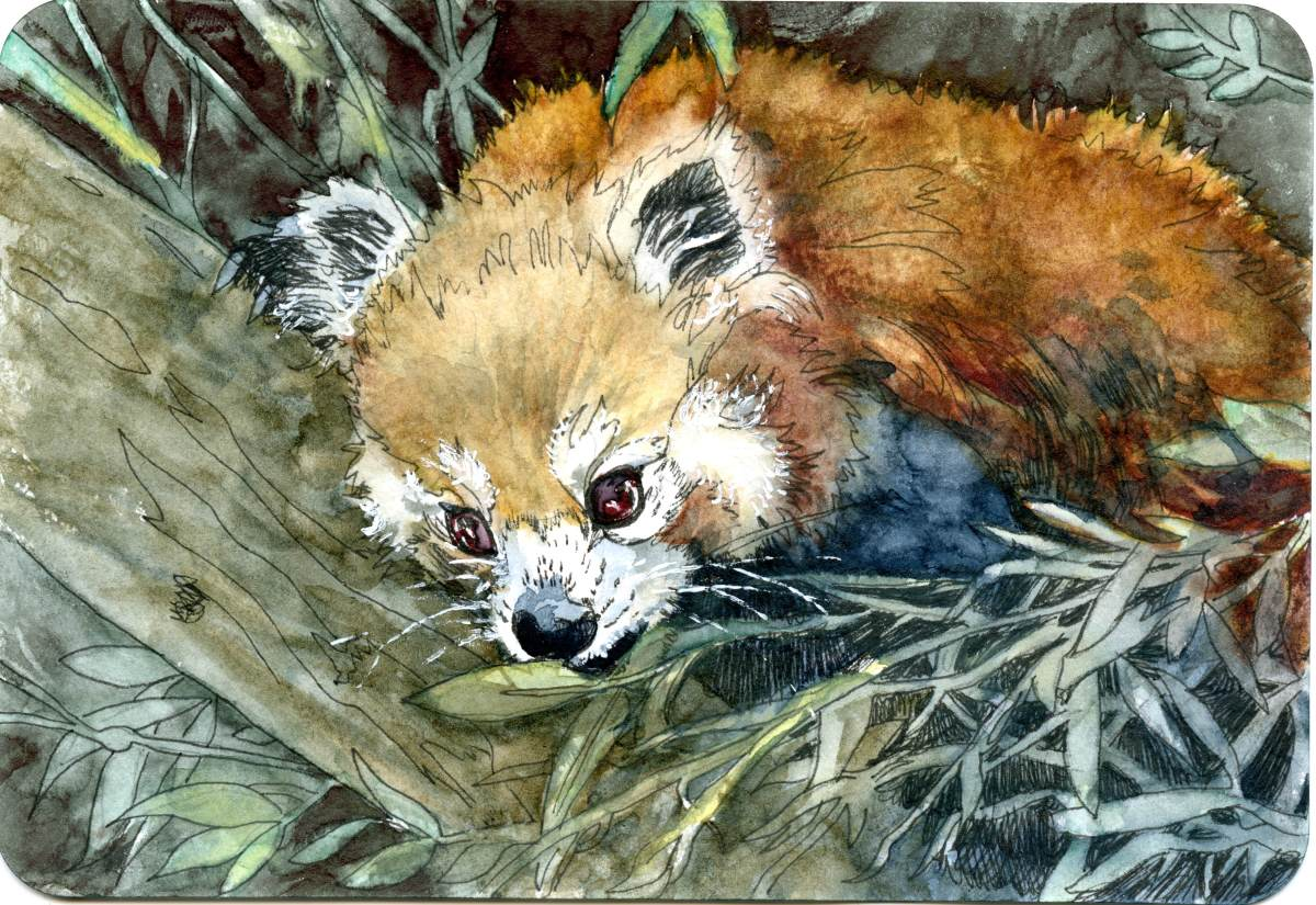 Red Panda – Postcards for the LunchBag