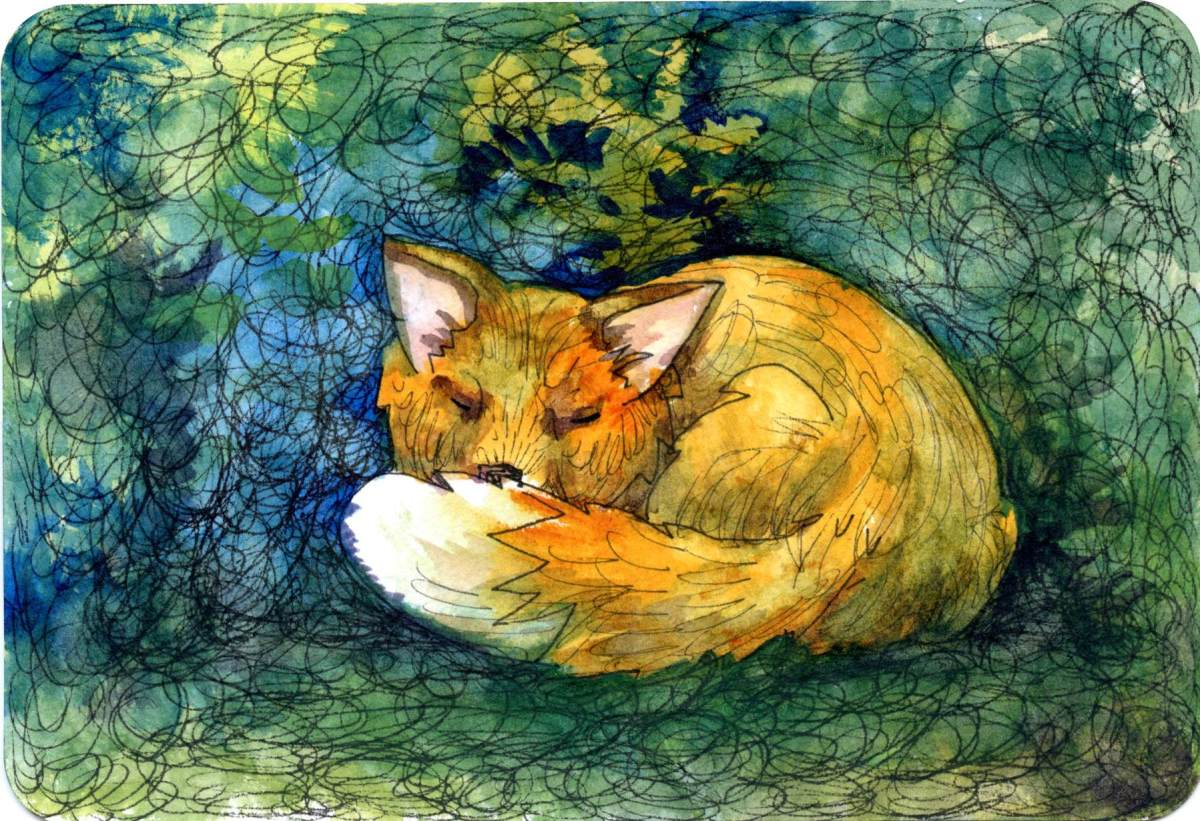 Red Fox – Postcards for the LunchBag