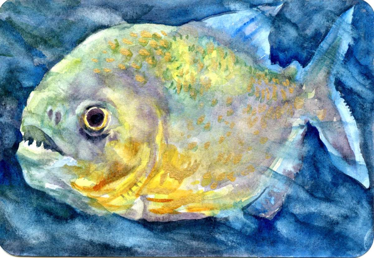 Gold Dust Piranha – Postcards for the LunchBag