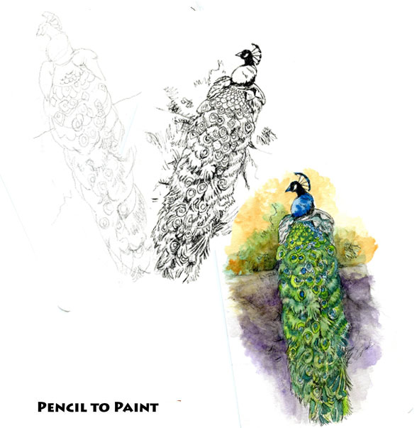 Peacock – Pencil to Paint Tutorial