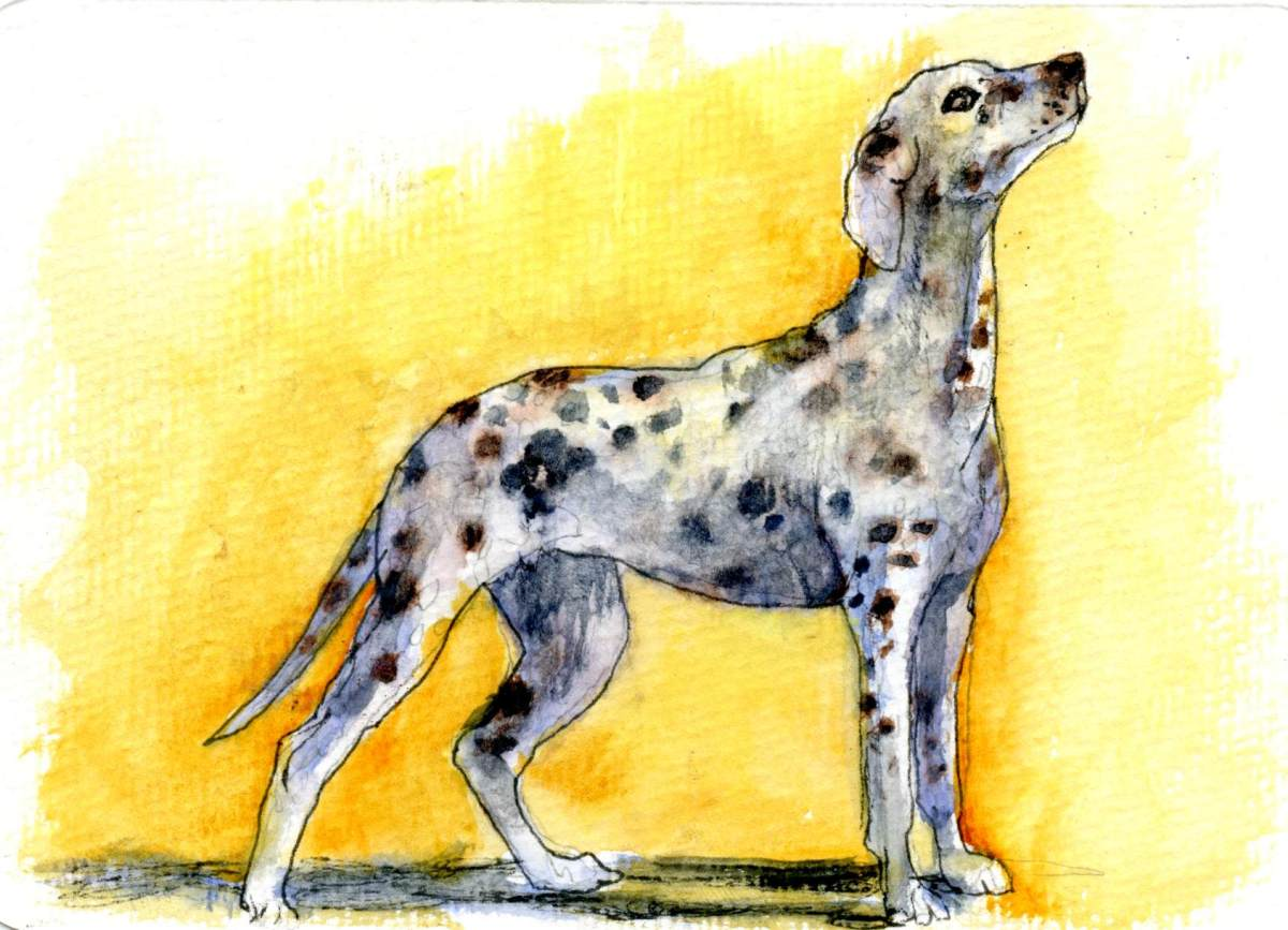 Dalmatian Dud- Postcards for the Lunch Bag