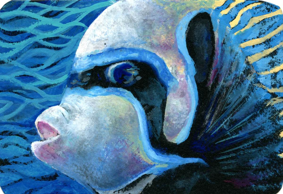 Emperor Angelfish – Postcards for the Lunch Bag