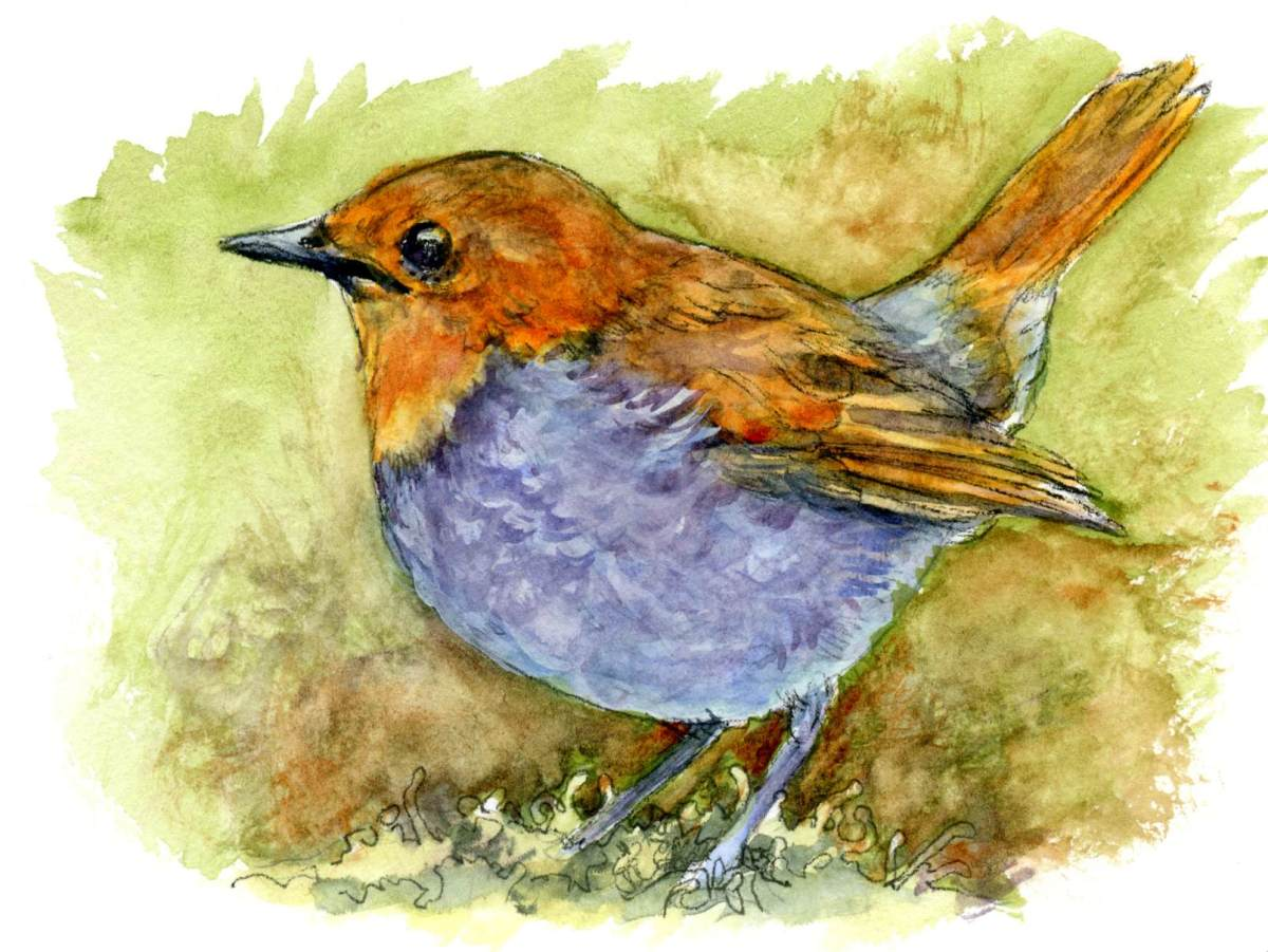 Japanese Robin – Postcards for the Lunch Bag
