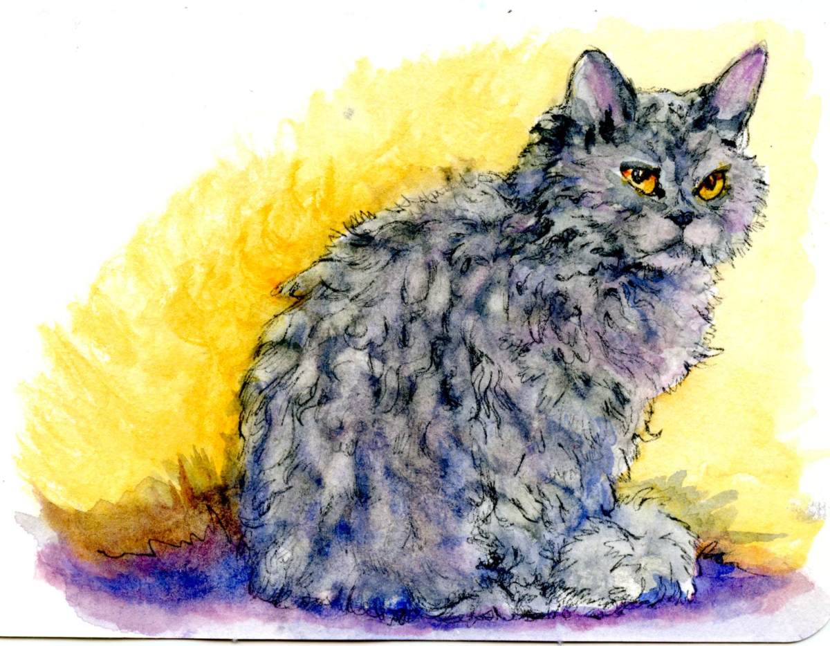 Selkirk Rex – Postcards for the Lunch Bag
