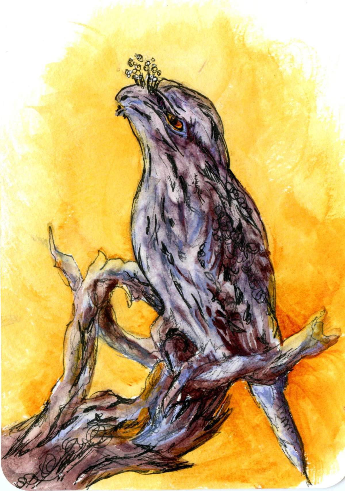 Tawny Frogmouth Owl – Postcards for the Lunch Bag