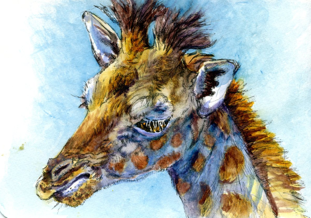 Baby Giraffe – Postcards for the Lunch Bag