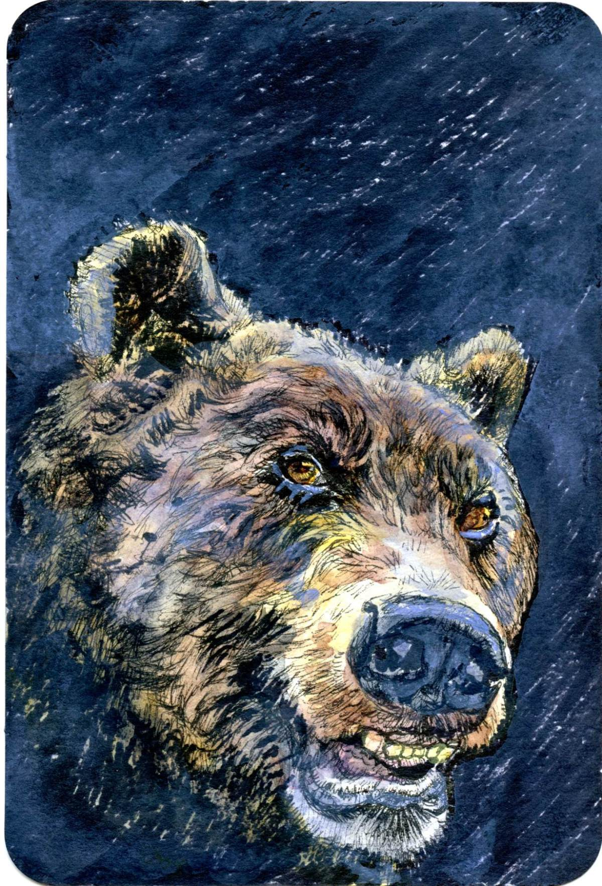 Bear Market – Postcards for the Lunch Bag