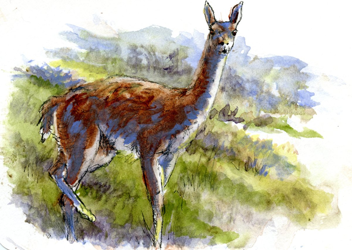 Guanaco – Postcards for the Lunch Bag