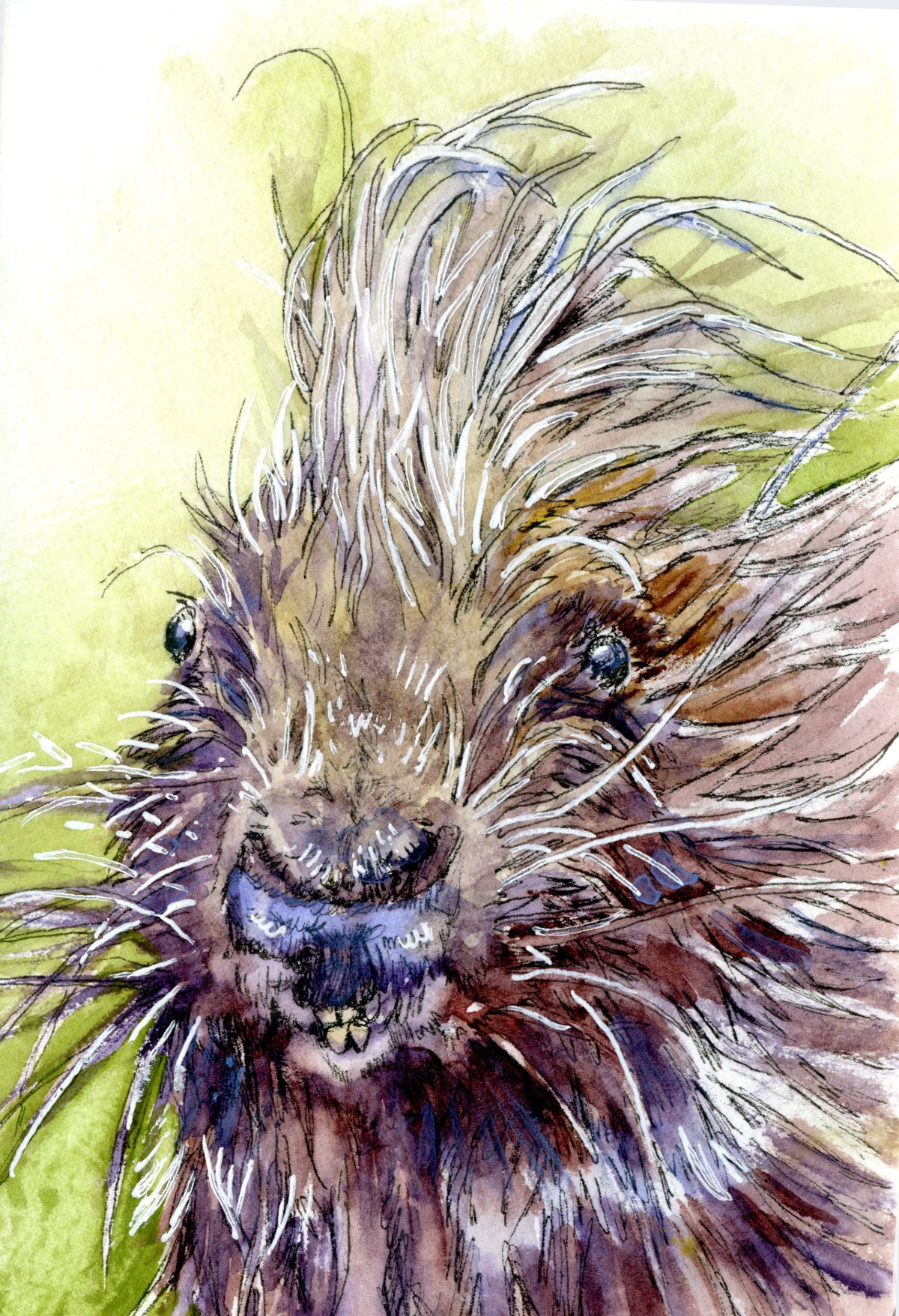 Porcupine – Postcards for the Lunch Bag