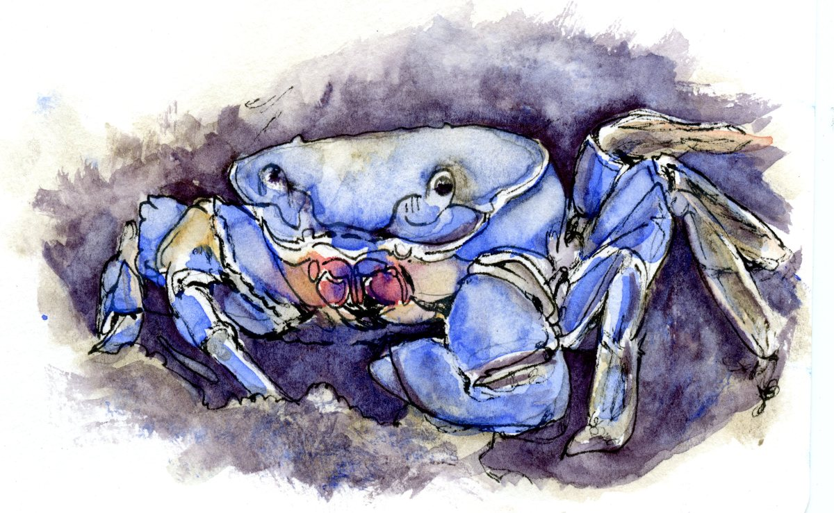 Blue Crab – Postcards for the Lunch Bag