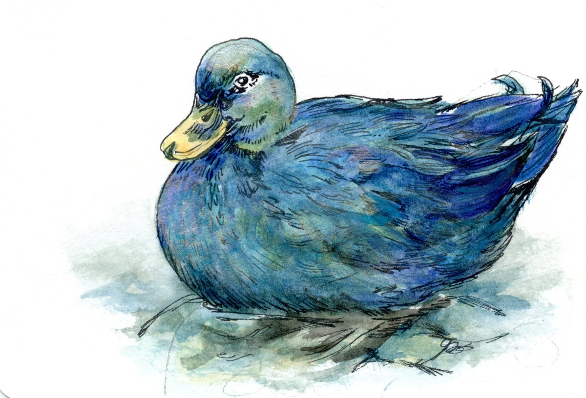 Emerald Duck – Postcards for the Lunch Bag