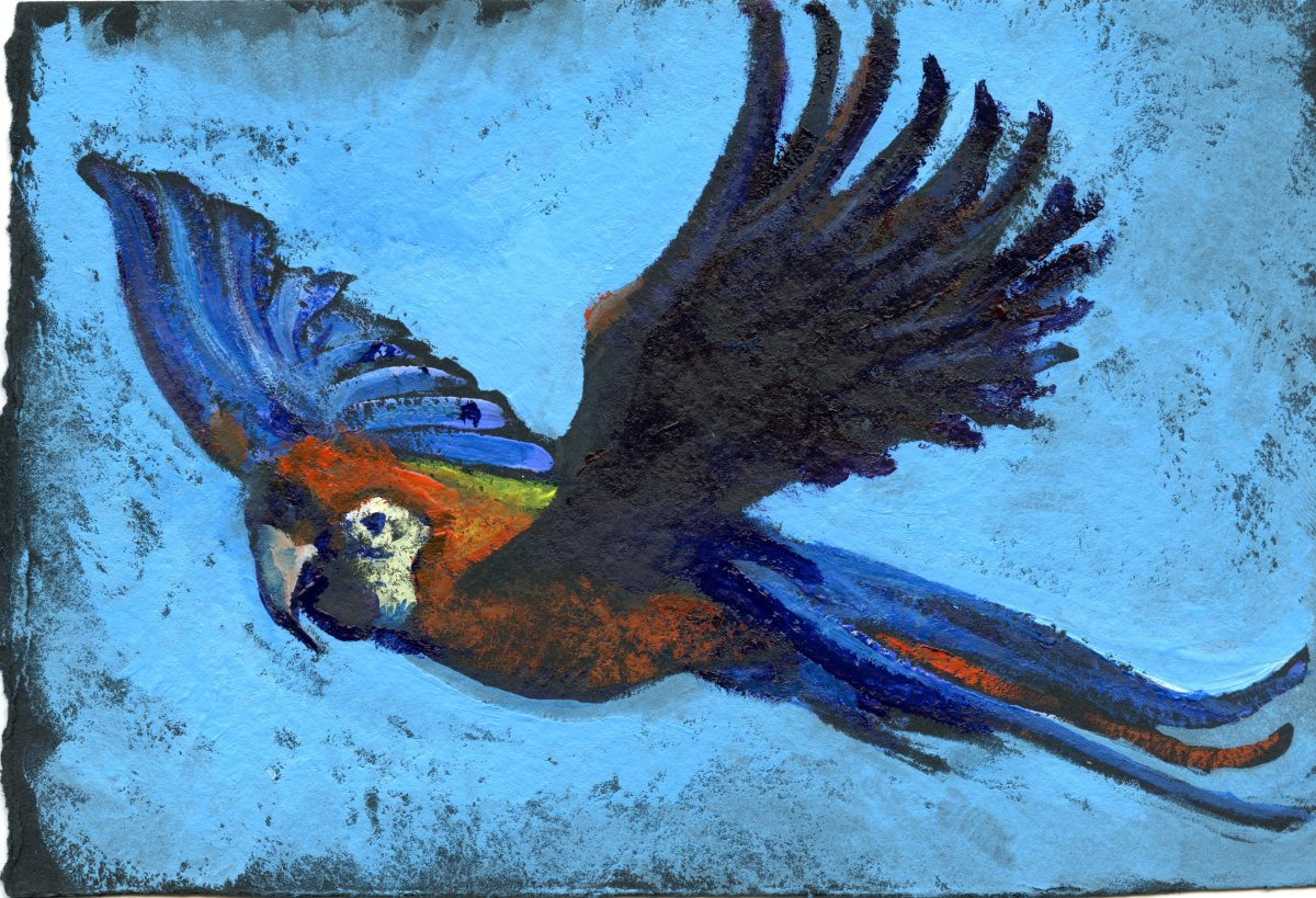 Scarlet Macaw-Postcards for the LunchBag