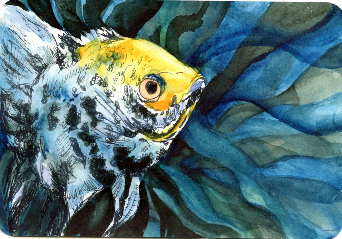 Freshwater Angelfish-Postcards for the Lunch Bag