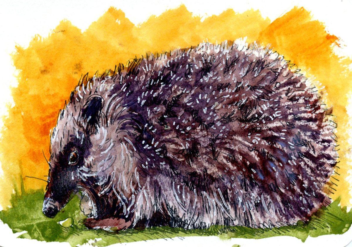 Hedgehog -Postcards for the LunchBag
