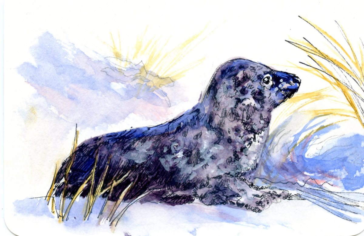 Leopard Seal -Postcards for the Lunch Bag